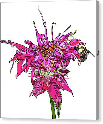 Bee Balm Canvas Print by Jamie Downs