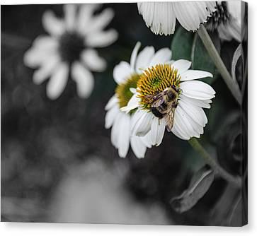 Bee Daisied Canvas Print