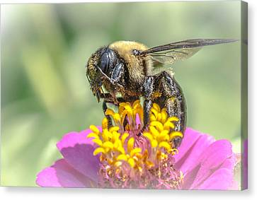 Bee Dream Canvas Print by Bruce Pritchett