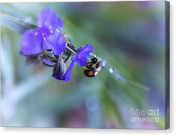 Bee Harmony Canvas Print by Mary Lou Chmura