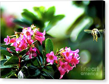 Canvas Print featuring the photograph Bee In Flight by Micah May