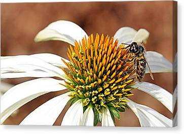 Canvas Print featuring the photograph Bee In The Echinacea  by AJ Schibig