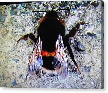 Bee Canvas Print by Joyce Woodhouse