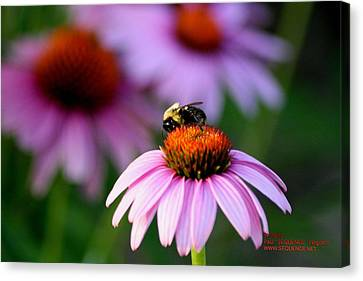 Canvas Print - Bee Left by Paul SEQUENCE Ferguson             sequence dot net