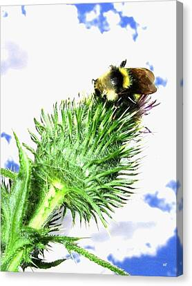 Bee-line 4 Canvas Print by Will Borden