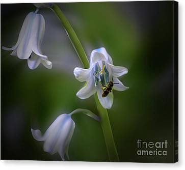 Bee On Blue Bell Flower Canvas Print