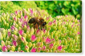 Canvas Print featuring the photograph Bee On Flower by Larry Keahey