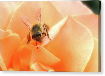 Bee On Flower Canvas Print by Matthew Bamberg