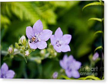 Bee On Lavender Flower Canvas Print