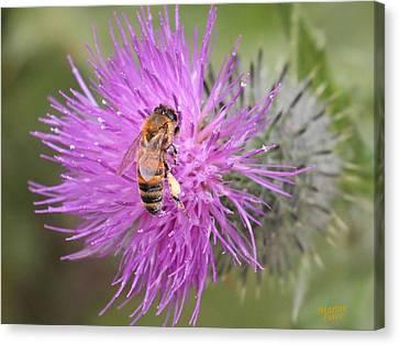 Bee On Purple Thistle Canvas Print