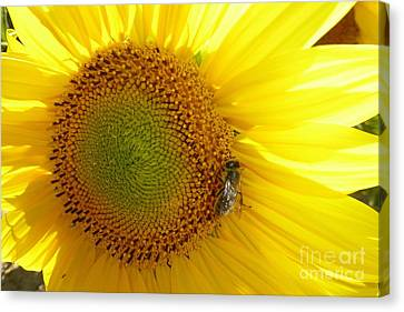 Canvas Print featuring the photograph Bee On Sunflower by Jean Bernard Roussilhe