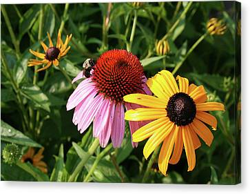 Bee On The Cone Flower Canvas Print by Greg Joens