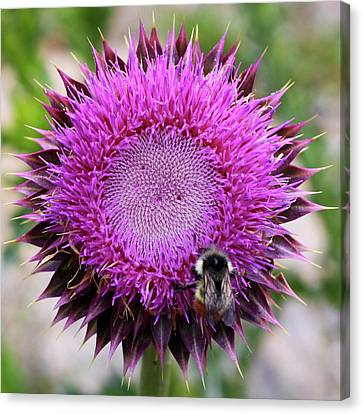 Canvas Print featuring the photograph Bee On Thistle by David Chandler