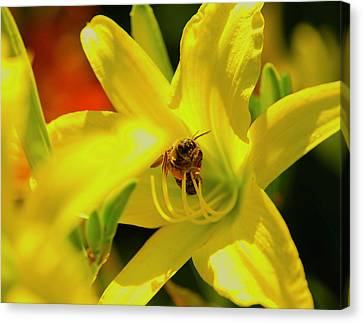 Bee On Yellow Lilly Canvas Print