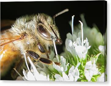 Bee Portrait Canvas Print