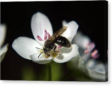 Bee Still Canvas Print