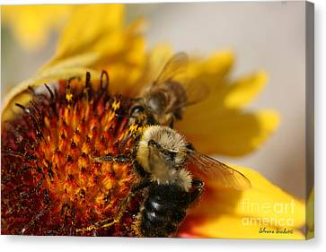 Bee Two Canvas Print by Silvana Siudut