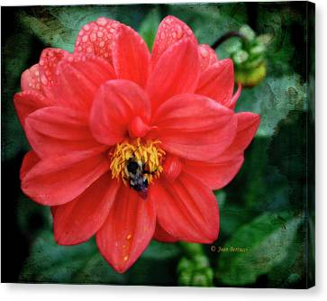 Canvas Print featuring the photograph Bee-utiful by Joan Bertucci