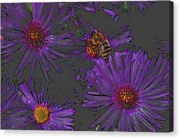 Bee With Asters On Gray Canvas Print by ShaddowCat Arts - Sherry