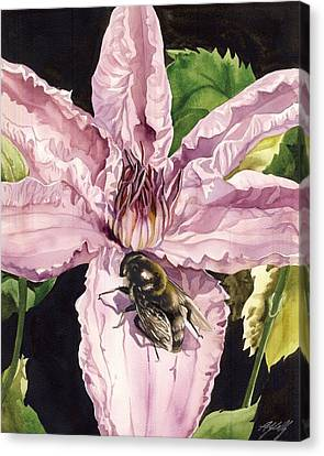 Bee With Pink Clematis Canvas Print by Alfred Ng