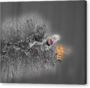 Beeautiful Canvas Print by Kelly Jones