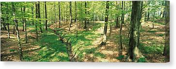 Forest Floor Canvas Print - Beech Forest by Panoramic Images