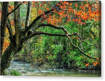 Beech Tree And Swinging Bridge Canvas Print
