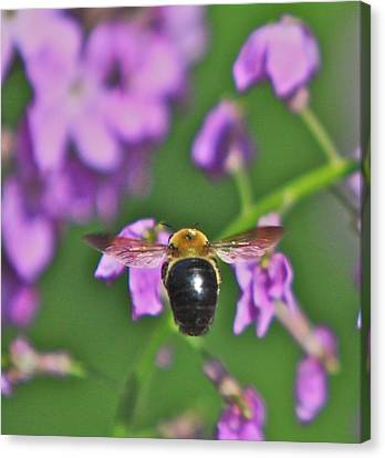 Beehind Canvas Print by Robert Pearson