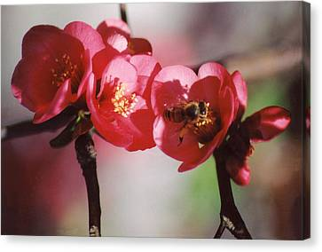 Beeing Pretty Busy Canvas Print by Jan Amiss Photography