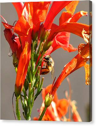 Day In A Life Of A Bee Canvas Print