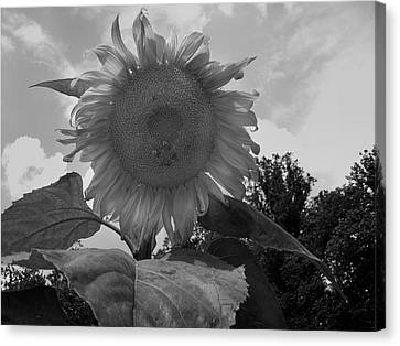 Canvas Print featuring the digital art Bees On A Sunflower by Chris Flees