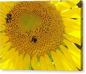 Canvas Print featuring the photograph Bees Share A Sunflower by Sandi OReilly