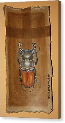 Beetle II Canvas Print by Gonca Yengin