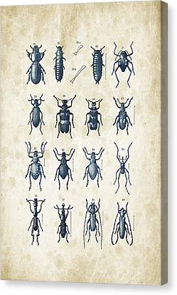 Beetles - 1897 - 03 Canvas Print by Aged Pixel