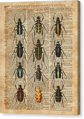 Beetles Bugs Zoology Illustration Vintage Dictionary Art Canvas Print by Jacob Kuch