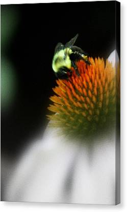 Canvas Print featuring the photograph Beeutiful  by Laura DAddona