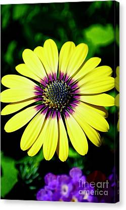 Beginning Of Spring Canvas Print by Andrea Spritzer
