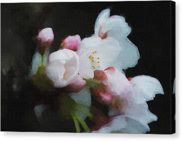 Beginning To Bloom A Good Sign For Spring Canvas Print by Dan Friend