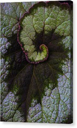 Begonia Leaf Close Up Canvas Print by Garry Gay