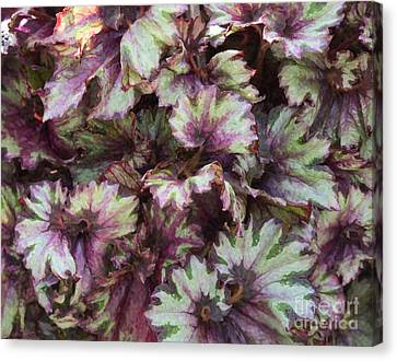Begonia Raspberry Swirl Canvas Print by Tim Gainey