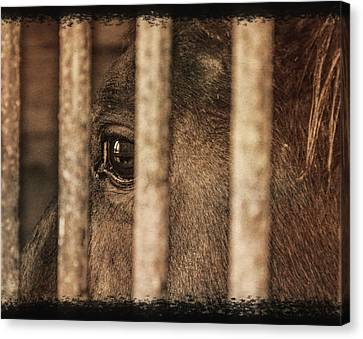 Behind Bars Canvas Print by Jim Cook