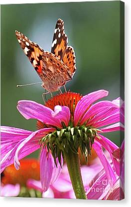 Canvas Print featuring the photograph Behind The Painted Lady by Lila Fisher-Wenzel