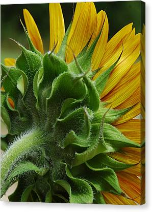 Canvas Print featuring the photograph Behind The Sun-flower by Lori Mellen-Pagliaro