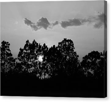 Behind The Trees Canvas Print by Florene Welebny