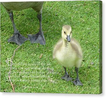 Behold The Gosling Walks Softly Canvas Print