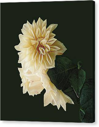 Beige Bold And Beautiful Canvas Print by RC DeWinter