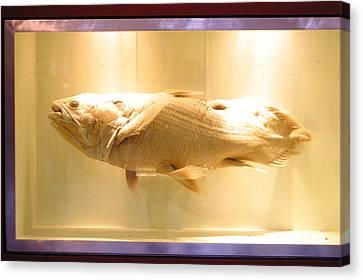 Beige Fish Canvas Print by Jez C Self