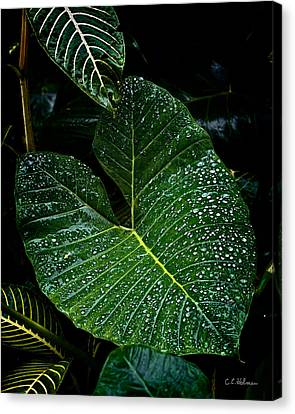 Bejeweled Leaf Canvas Print by Christopher Holmes
