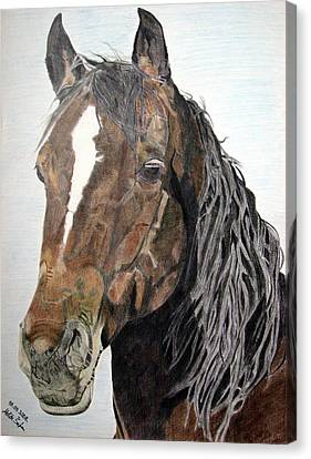 Canvas Print featuring the drawing Bela by Melita Safran