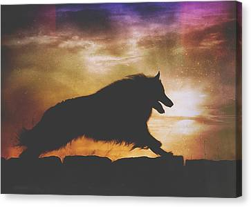 Belgian Sheepdog Art 7 Canvas Print by Wolf Shadow  Photography